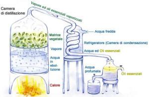 Estrazione-oli-essenziali-terapeutici-02_1